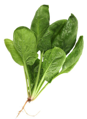 spinach plant id 16189